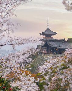 Kyoto e Sakura #kyoto #Japan