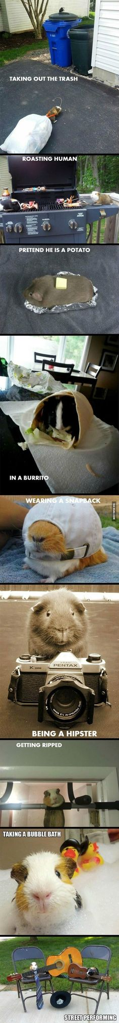 What Can a Guinea Pig Do?