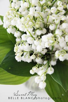 Lilly of the Valley Love - Photography: BELLE BLANC