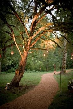 up-lit trees and home-made mason jar lanterns - Modern Mason Jar Lanterns, Mason Jars, Tree Lighting, Wedding In The Woods, Xmas Tree, The Great Outdoors, Indoor Outdoor, Wedding Decorations, Dreams