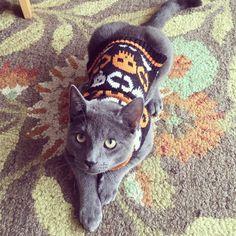 #tbt #Halloween #catdressup #kittens #cats #cat #kitten #kittensofinstagram #instakitty #instacat #catsofinstagram #greycat #grey #handsomecat #handsome #greeneyes #treats #cattreats #crazycatlady #crazycatladies #catlove #catlovers #catmom #catmummy #caturday