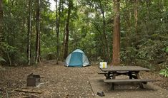 Sheepstation Creek Campground, NSW