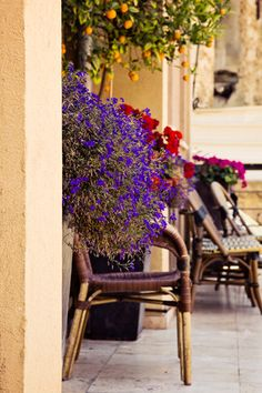 A beautiful terrace in Tel- Alrabee'a, Yaffa, Falasteen