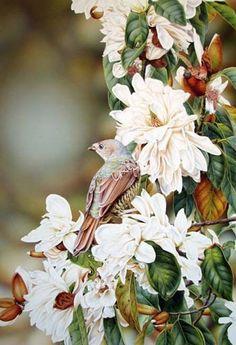 Satin Bowerbird by Heidi Willis on ARTwanted