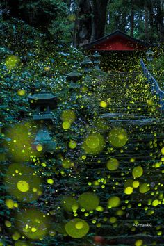 "beifongkendo: """"Fireflies"" by Hiroyuki Shinohara‎ (as seen on…"