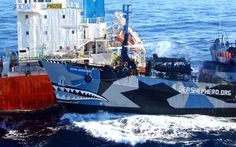 The Sea Shepherd ship Bob Barker collides with the Japanese whaling fleet fuel tanker the San Laurel in icy waters off Antarctica. Both sides accused the other of ramming their vessels. Veteran anti-whaling campaigner Paul Watson said the Japanese factory ship the Nisshin Maru rammed the Sea Shepherd Conservation Society's much smaller vessel the Bob Barker. But on its website, Japan's Institute for Cetacean Research accused several Sea Shepherd boats of ramming the Nisshin Maru as it…
