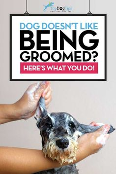 How To Train A Dog To Enjoy Grooming Video