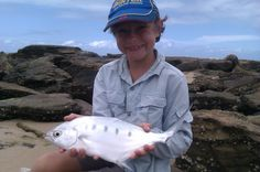 Dart caught in the Maroochy river mouth