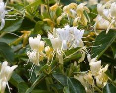 Semanarea cepei arpagic – secretul unei batrane - Pentru Ea Plants, Plant, Planets