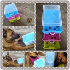 dog obedience training tips Diy Dog Toys, Best Dog Toys, Pet Toys, Dog Enrichment, Enrichment Activities, Brain Games For Dogs, Dog Games, Dog Puzzles, Interactive Dog Toys