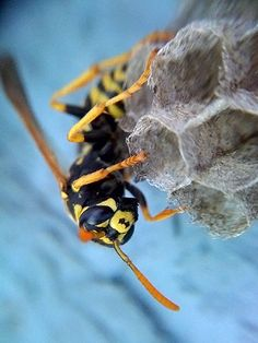 Adapting the iPhone for Insect Photography