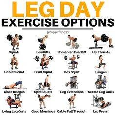 This is a step-by-step guide on the leg curl exercise. Learn all the benefits and leg curl alternative exercises with this in-depth post. Leg Workouts For Men, Leg And Glute Workout, Gym Workout Tips, Weight Training Workouts, No Equipment Workout, Glutes Workout Men, Leg Training, Leg Exercises With Weights, Men Exercise
