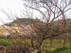 Arriva la primavera e le passeggiate all'aria aperta #bosa #bosatour #sardegna #sardinia #nature #castle #castello #borgo