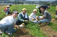 A Japan trip through Worldwide Opportunities on Organic Farms - one of our amazing voluntourism experiences around the world