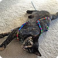 Hello, my name is Reese's Pieces. I was born in July 2014. I am a beautiful little girl, very sweet and loving, quiet and kind-hearted. I have short-length tortie-colored fur. I enjoy being petted and scratched. I even drop to the floor and roll over for more pets. I get along great with other kitties and enjoy their companionship. I use a litterbox like a good girl and hope to find a home where I'll be loved for life. I will be happiest in a quieter home without a lot of chaos. $60