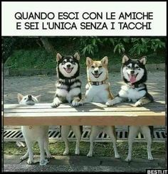 Funniest Animal Memes Of The Day That Are Extremely Hilarious Pics) - Awed! Funny Animal Fails, Funny Animal Pictures, Dog Pictures, Funny Dogs, Cute Dogs, Funny Photos, Funny Shit, Funny Cute, Funny Sarcasm