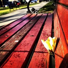 This photo was taken at Easter of this year as I was walking my dog through the city park. This little flower was placed in the park bench. What is unique is you can see written on the side graffiti that says ...