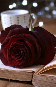 Book Flowers, Flowers For You, Cute Emoji Wallpaper, Rose Wallpaper, Dp Photos, Instagram Logo, Dark Colors, Pretty Pictures, Red Roses