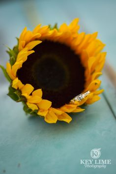 Ring! | Key Lime Photography