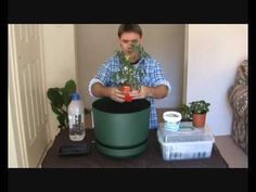 How to Grow Tomatoes in Pots by Marty Ware.  Click the image or website link to watch this informative video now! @  Happy House and Garden Social Site