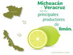 Michoacán y Veracruz son los principales productores de limón. SAGARPA SAGARPAMX #SOMOSPRODUCTORES