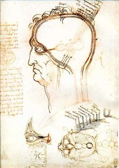 leonardo drawings, a study of anatomy from the