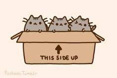 Pusheen the cat kittens. Cute pusheen kittens in a box with two fighting. Chat Pusheen, Pusheen Love, Pusheen Unicorn, Unicorn Cat, Fat Cats, Cats And Kittens, I Love Cats, Crazy Cats, Pusheen Stormy