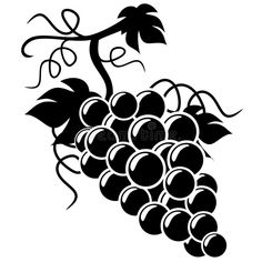 Illustration about Silhouette Grapes illustration with white background. Illustration of advertising, engraving, heraldic - 14311502 Wine Images, Art Images, Clipart, Indian Skull Tattoos, Veggie Art, Picture Icon, Fruit Art, Line Art, Painted Rocks