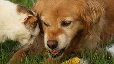Come ringiovanire i vecchi giocattoli dei nostri animali