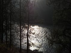 sunlight bouncing off the river, shimmers