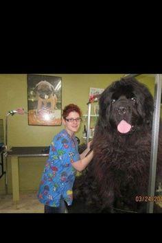 Whoa that's one huge dog!!