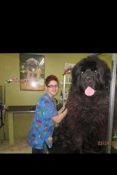 Whoa that's one huge dog!!