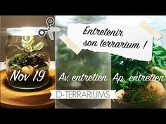 Aquarium Terrarium, Terrariums, Place Cards, Place Card Holders, Instagram, Interview, Terrarium, Terraria