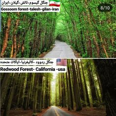Redwood Forest California, California Usa, Iran, Instagram Posts, Plants, Flora, Planters