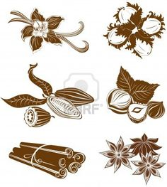 Collection of dessert ingredients. Hazelnuts, Cocoa beans, Vanilla pods, Anise, and Cinnamon isolated on white Stock Photo