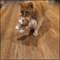 CAT GIF • Mama Cat looking for a quiet place for her loved baby stuffed plush toy. Maternal instinct is strong: it works even with stuffed plush toys.