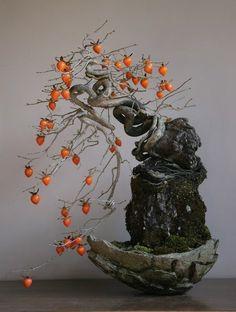 Bonsai persimmon