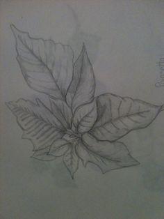 Pencil sketch poinsettia By Jeanne Tyrrell