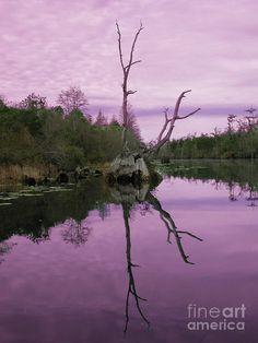 ✯ Okefenokee Swamp, Georgia
