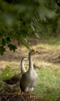 """Fred: """"This way to the lake sweetie. Alice: Don't """"sweetie"""" me, we're lost again, aren't we Fred?"""""""
