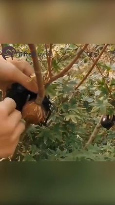 Garden Care, Edible Garden, Vegetable Garden, Garden Plants, Organic Gardening, Gardening Tips, Grafting Plants, Plantas Bonsai, Beautiful Flowers Garden