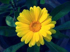 #Beautiful Yellow flower