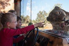 Lions at Werribee Open Range Zoo!