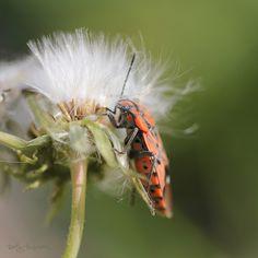 Bugs 2015