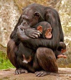 Momma keep you safe.