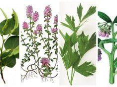 Korn, Plant Leaves, Health, Plants, Health Care, Plant, Planets, Salud