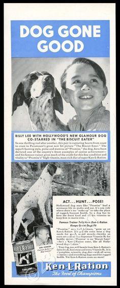 1940 The Biscuit Eater pointer dog photo Ken-L-Ration vintage print ad FOR SALE…