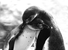 I sortof have a thing for penguins.