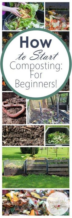 How to Start Composting For Beginners | Bees and Roses
