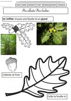 EEDD La forêt cycle 2 cycle 3 | BLOG GS CP CE1 CE2 de Monsieur Mathieu JEUX et RESSOURCES Science Montessori, Primary Science, Science For Kids, Science And Nature, Cycle 3, Teaching French Immersion, Science Experience, Egg Shells In Garden, French Education